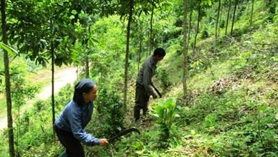 Ba Bể (Bắc Kạn): Trồng rừng vượt kế hoạch