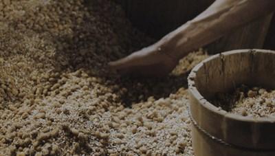 Có thể điều trị bệnh Parkinson bằng nấm mốc lên men xì dầu
