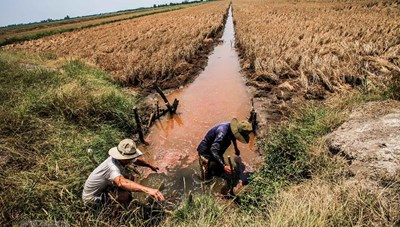 Đồng bằng sông Cửu Long: Đối diện khô hạn, ngập mặn