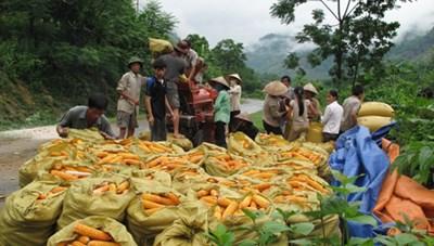 Hỗ trợ phát triển sản xuất, nhân rộng mô hình giảm nghèo