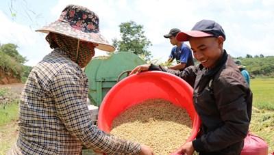 Học nghề trồng lúa nước