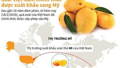 [Infographics] Xoài Việt Nam chính thức được xuất khẩu sang Mỹ