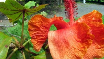 Kỳ lạ  những loài hoa