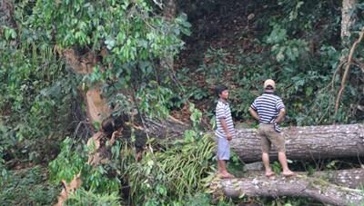 Lốc xoáy đổ cây gây mất điện 9 xã vùng biên giới