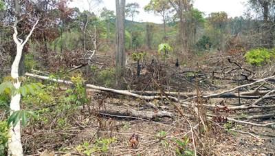 Nan giải tình trạng đốt rừng, lấn chiếm đất rừng