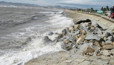 Ninh Thuận: Xử lý đê biển sạt lở do triều cường