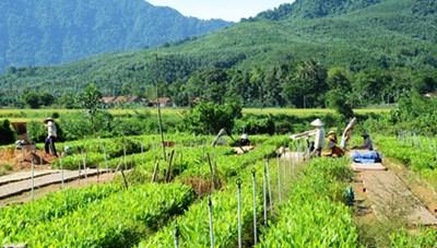 Phát triển rừng ở các huyện miền núi Phú Thọ: Góp phần xóa đói giảm nghèo