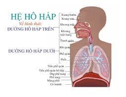 Phòng chống hội chứng viêm đường hô hấp