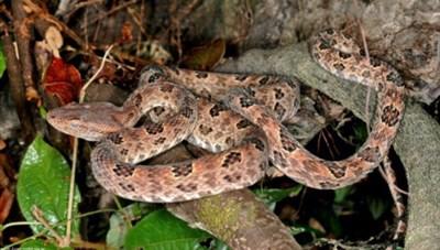 Thả 68 cá thể động vật hoang dã về Vườn Quốc gia Bái Tử Long