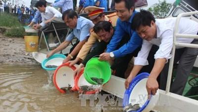 Thanh Hoá: Thả một tấn cá giống xuống sông Mã