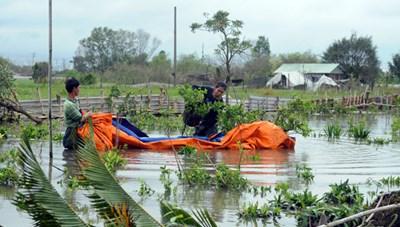 TP Hồ Chí Minh: Làng hoa, cây cảnh phục vụ Tết bị thiệt hại nặng nề