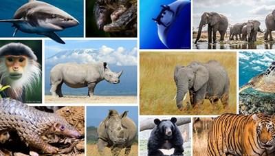 Cam kết bảo vệ động vật hoang dã