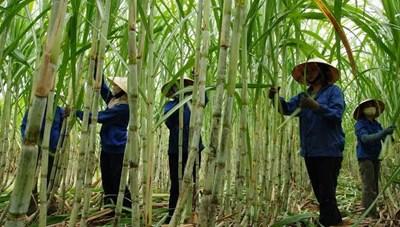 Nâng sức cạnh tranh cho ngành mía đường