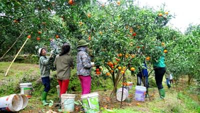 Yên Bái: Phát triển mô hình trồng cây ăn quả