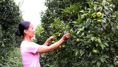 Cao Bằng: Hỗ trợ hội viên Hội Phụ nữ phát triển kinh tế