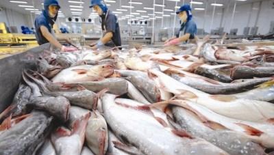 Thúc đẩy tiêu thụ cá tra ở thị trường nội địa