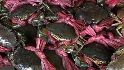 Cua Năm Căn và Lẩu mắm U Minh vào top 100 món ăn đặc sản Việt Nam