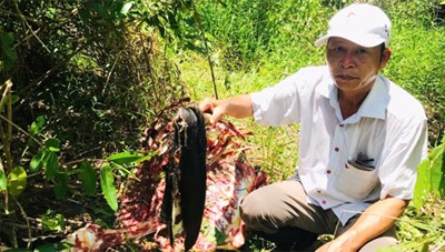Báo động nạn giết hại động vật quý hiếm