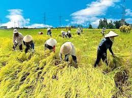 Hà Tĩnh: Chủ động gặt lúa, neo thuyền