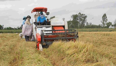 Chủ động tháo gỡ 'điểm nghẽn' cho lưu thông lúa gạo, nông sản Đồng bằng sông Cửu Long