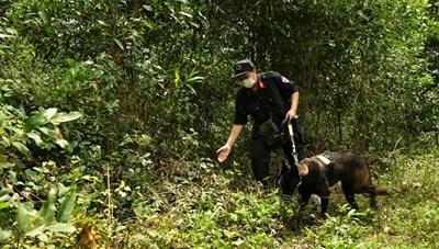 Quảng Bình: Truy tìm đối tượng nghi giết hại mẹ vợ
