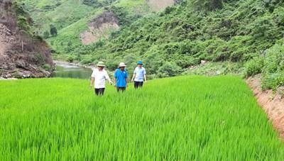Hướng dẫn đồng bào dân tộc ở bản Dộ - Tà Vờng trồng lúa nước