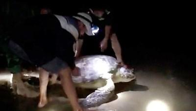 Quảng Bình: Thả về biển một cá thể rùa quý hiếm