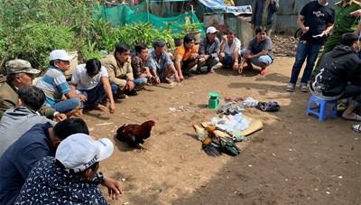 An Giang: Bắt giữ 14 đối tượng đá gà ăn tiền