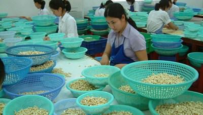 Kim ngạch xuất khẩu ngành điều đạt trên 3 tỷ USD