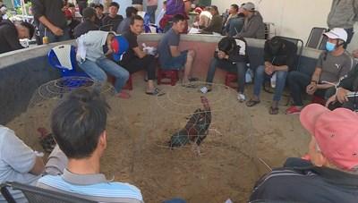 Bắt quả tang gần 50 đối tượng đá gà ăn tiền với thủ đoạn tinh vi