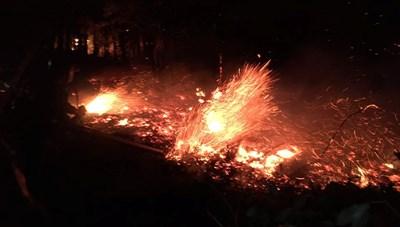 Hà Tĩnh: Nỗ lực cứu gần 4 ha rừng trong đêm