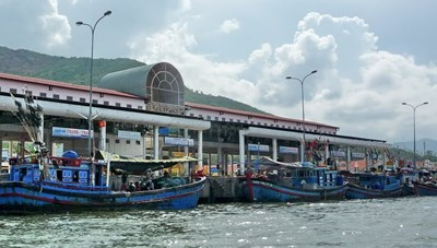 Khánh Hòa: Ngư dân trúng đậm cá ngừ đại dương