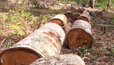Lâm Đồng: Phó Thủ tướng Trương Hòa Bình, yêu cầu xử lý nghiêm vụ phá rừng
