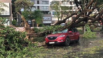 TP HCM: Mưa lớn, gió giật mạnh làm cây đổ đè bẹp một chiếc ô tô