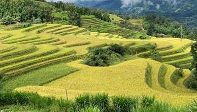 [Ảnh] Lúa chín vàng trên ruộng bậc thang, người Mông mở hội Gầu Tào