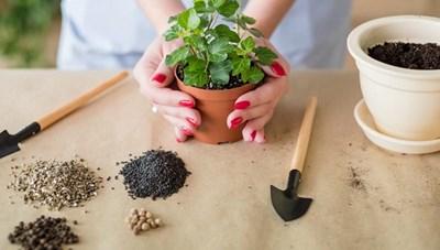 Mẹo hay chăm sóc cây cảnh trong nhà cần lưu tâm