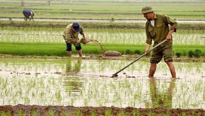 Trên 63% diện tích đã có nước cho gieo cấy vụ Đông Xuân