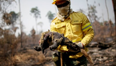 Amazon báo động cháy rừng
