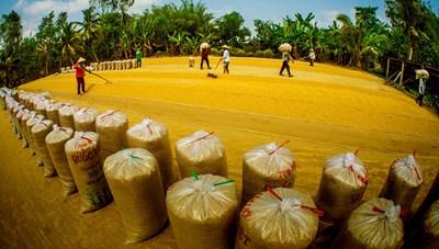 Thư gửi người xa xứ: Xứng danh hạt vàng