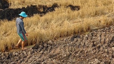 Chống sa mạc hóa và giảm bớt hạn hán