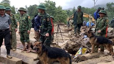 Vụ sạt lở ở Trà Leng: Chó nghiệp vụ vào hiện trường hỗ trợ tìm kiếm người mất tích