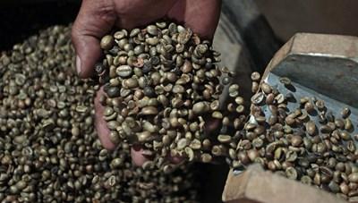 Xuất khẩu cà phê của Brazil tăng cao kỷ lục
