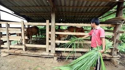 Hiệu quả các chương trình giảm nghèo ở Điện Biên