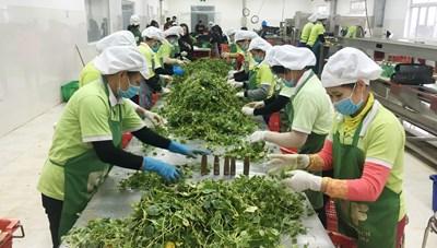 Vì sao nông sản Việt chưa 'chắc chân'?