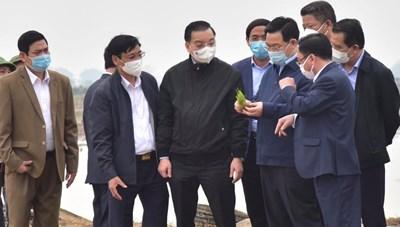 Bí thư Thành ủy Hà Nội xuống đồng cấy lúa, động viên nông dân