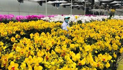 Nhà vườn trồng hoa Đà Lạt gặp khó vì Covid-19