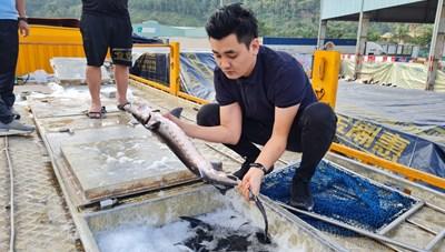 Tổng cục Hải quan yêu cầu kiểm soát việc nhập khẩu cá tầm Trung Quốc