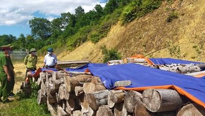 Thanh Hóa: Đại biểu HĐND xã thuê người vào phá rừng 'nhà mình'