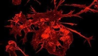 Giải đáp bí ẩn về phản ứng miễn dịch của con người