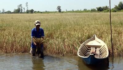 Đồng bằng sông Cửu Long ứng phó với xâm nhập mặn
